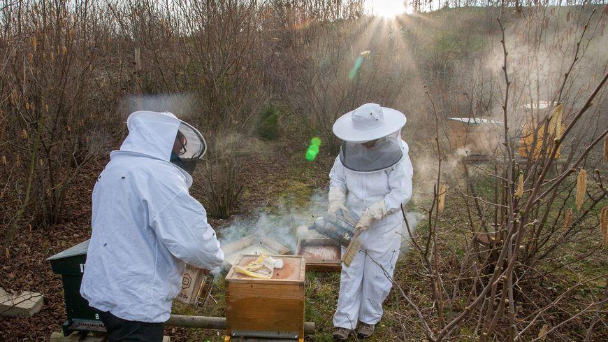 La famille Limon possède quelques 600 ruches, dispersées en Lorraine.