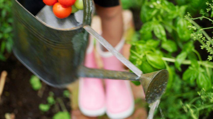 Un bon arrosage pour un beau jardin.