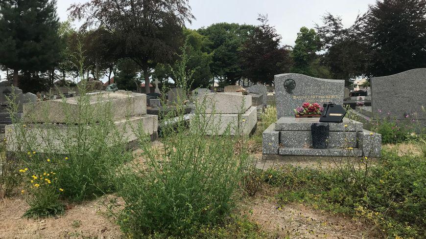 Les mauvaises herbes recouvrent parfois totalement certaines parcelles dans le cimetière Nord, au Havre.