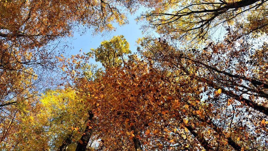 La forêt de Tronçais dans l'Allier va accueillir des centaines de marcheurs le 25 octobre