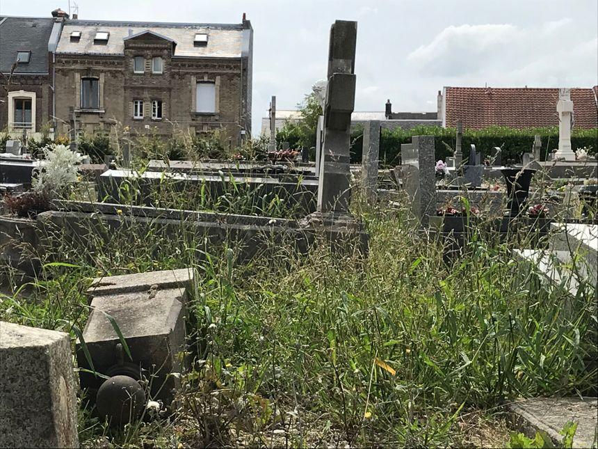 Les mauvaises herbes galopent entre les tombes au cimetière Sainte-Marie