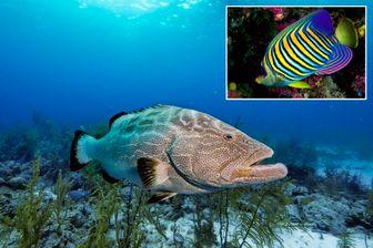 Des photos de 116 espèces, dont le mérou noir et le poisson-ange, ont été soumises à plus de 8 000 personnes pour déterminer leur valeur esthétique.