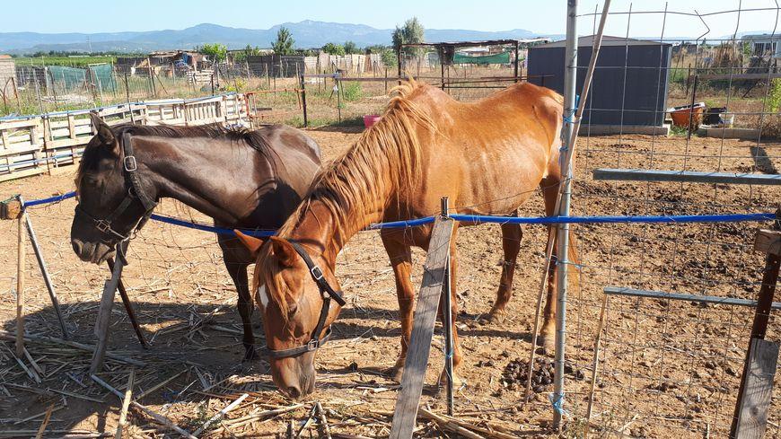 Les deux chevaux étaient quasiment livrés à eux-mêmes depuis quatre mois.