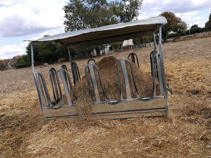 Dans les champs Nicolas et sa famille ont du installer des râteliers pour distribuer la nourriture aux vaches.