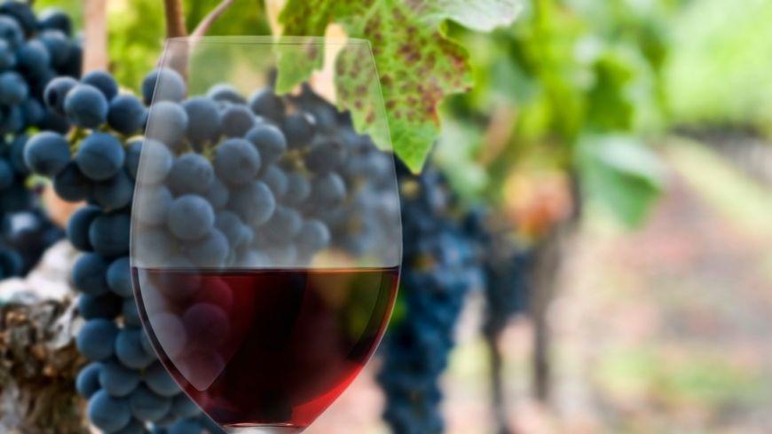 Faut-il forcément mettre cher pour être sûr d'avoir un bon vin ?