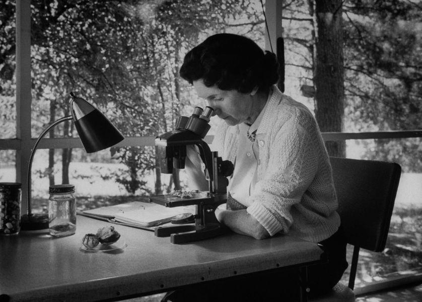 La biologiste Rachel Carson chez elle en 1962.