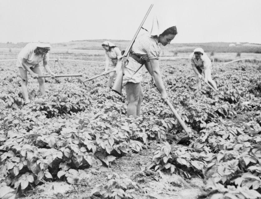 Jeunes filles travaillant aux champs dans un kibboutz à Deganya (mai 1948)