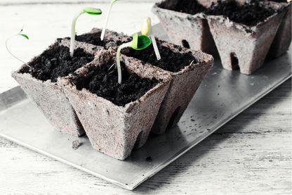 Fabriquer son propre compost, même quand on habite en appartement, n'est pas si compliqué