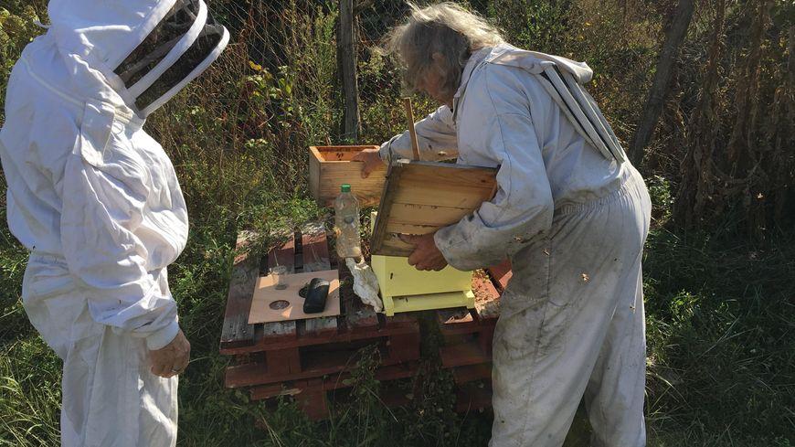 Les apiculteurs cherchent en permanence des idées pour préserver l'espèce et développer les bienfaits du miel.
