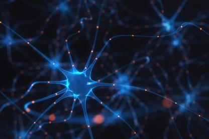 Human brain nerve cells