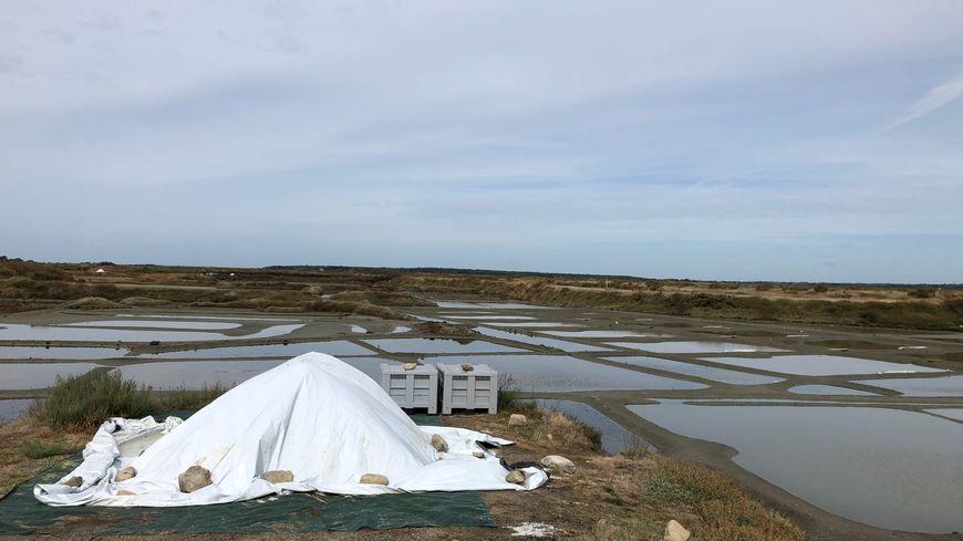 La saison touche à sa fin dans les marais salants de Guérande
