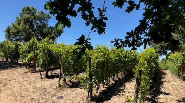 Au printemps dernier, Cyril et Julie Laudet ont repris les vignes de Nicolas Tison, l'ancien propriétaire.