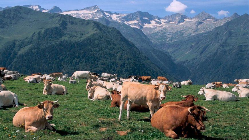 Pyrénées