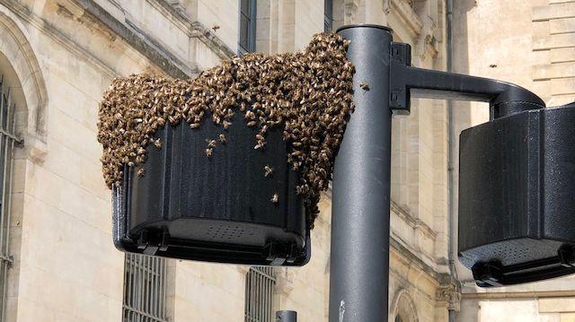 Tranquilles les abeilles de Nîmes mais pas rassurée les passants.