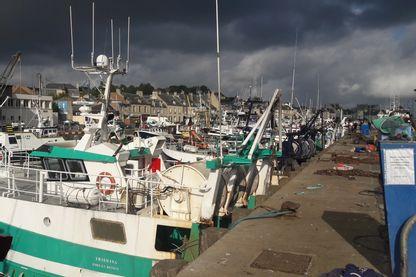 A Port-en-Bessin, les pêcheurs réalisent la majeure partie de leur chiffre d'affaires de l'année grâce à la coquille Saint Jacques.