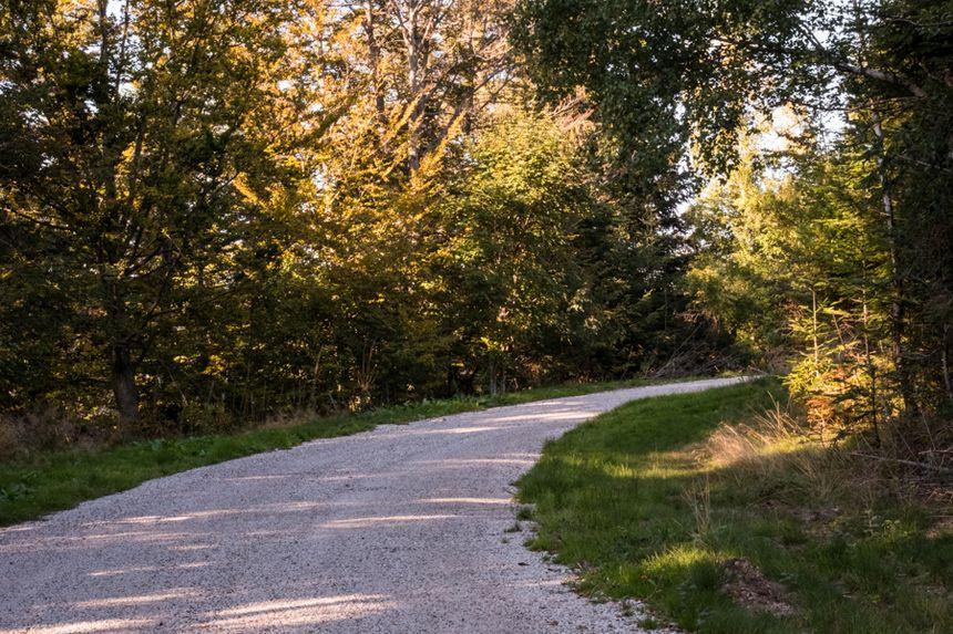 Le chemin forestier, ancienne route d'accès à la Planche