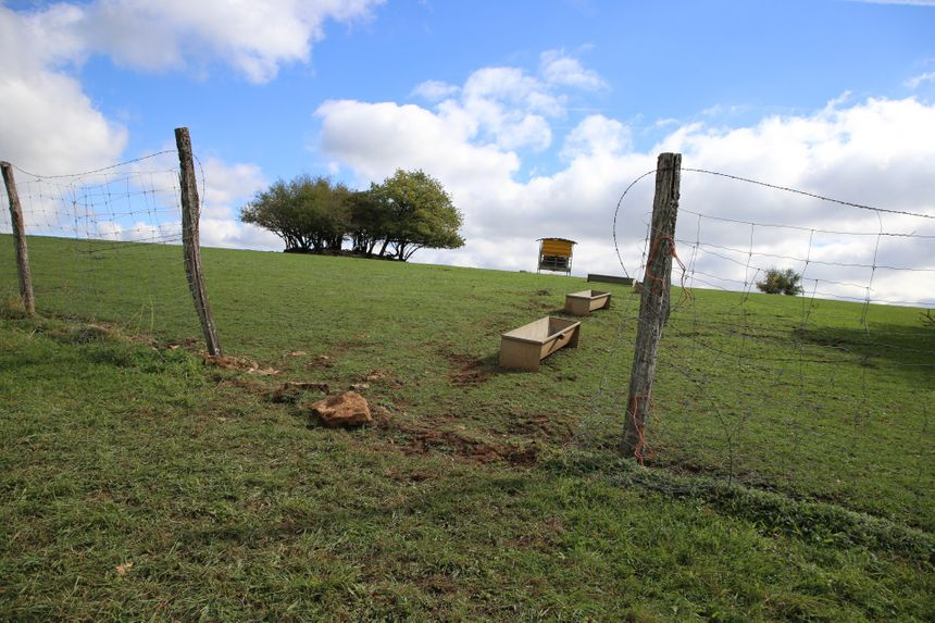 A Vernierfontaine, plus d'une centaine de cerfs, biches et faons d'élevage avaient profité d'une brèche volontaire dans le grillage, dimanche 23 septembre, pour s'évader.