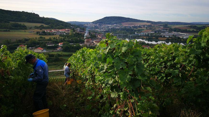 Vendanges avec vue à Contz-les-Bains