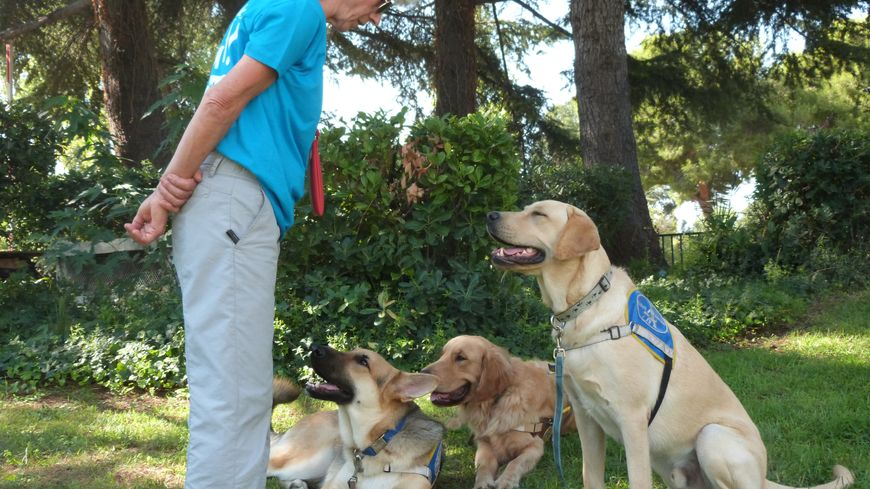 Des chiens sont éduqués pour devenir les yeux des personnes malvoyantes ou non voyantes