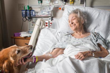 Des animaux pour faciliter la communication dans une unité de soins palliatifs