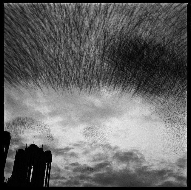 Reims, la cathédrale (1989)