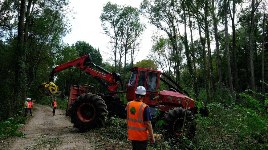 Abattage d'arbres à Kolbsheim en septembre 2018