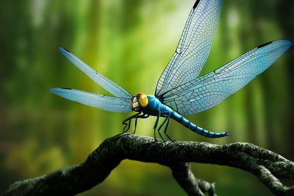 Reconstitution par ordinateur d'une Meganeura : libellule géante de l'ère carbonifrère (il y a 354-290 millions d'années). Cet insecte préhistorique pouvait atteindre 70 cm d'envergure.