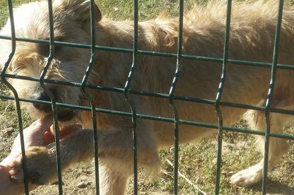 Plus de 6 000 animaux en attente d'adoption