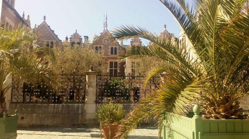 Les palmiers de la place de l'Etape à Orléans