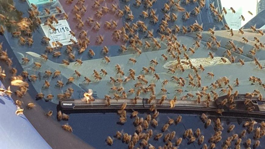 Les abeilles sur le camion (crédit : Jérémie Lacroix)
