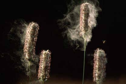 Quand le pollen nous renseigne sur les changements à venir des écosystèmes terrestres…
