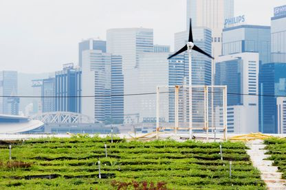 Agriculture urbaine a Hong Kong