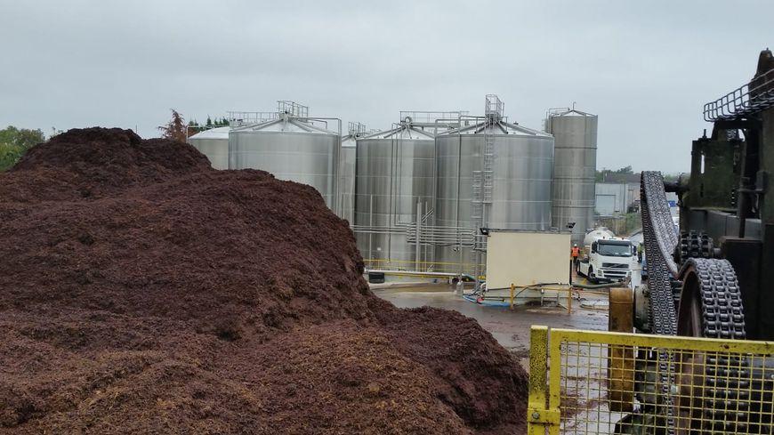 La quantité de marcs de raisin récoltée cette année est de 110.000 tonnes.