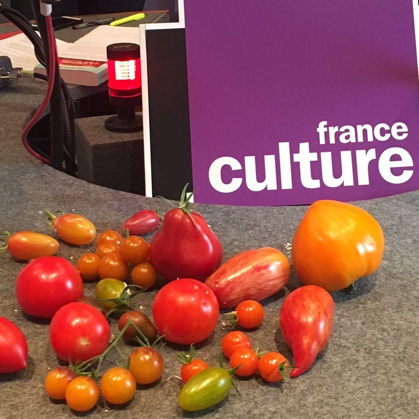 Les tomates de Pascal Antigny pour France Culture