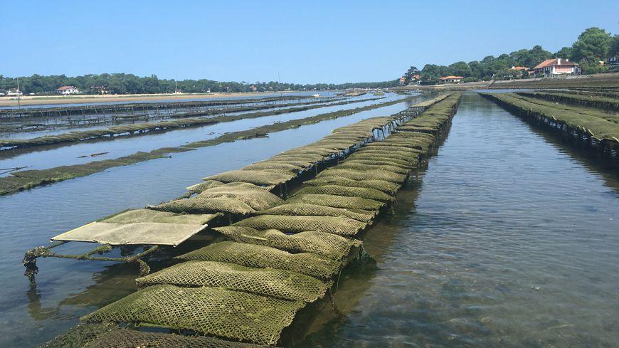 Le lac à marée basse permet la production des huîtres d'Hossegor.