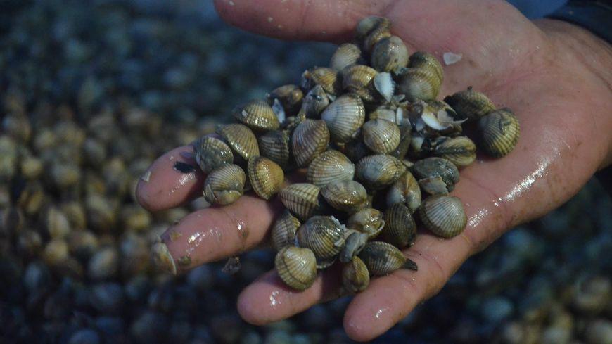 400 kg de coques ont été saisis.
