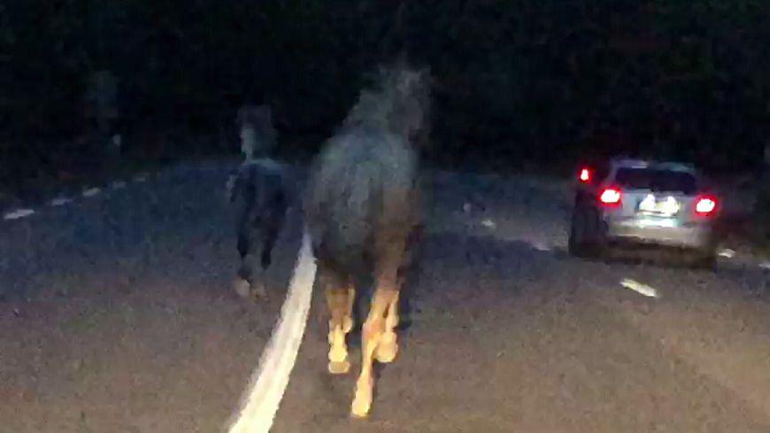 Deux chevaux galopaient sur la départementale 82 ce mardi matin en Ardèche.