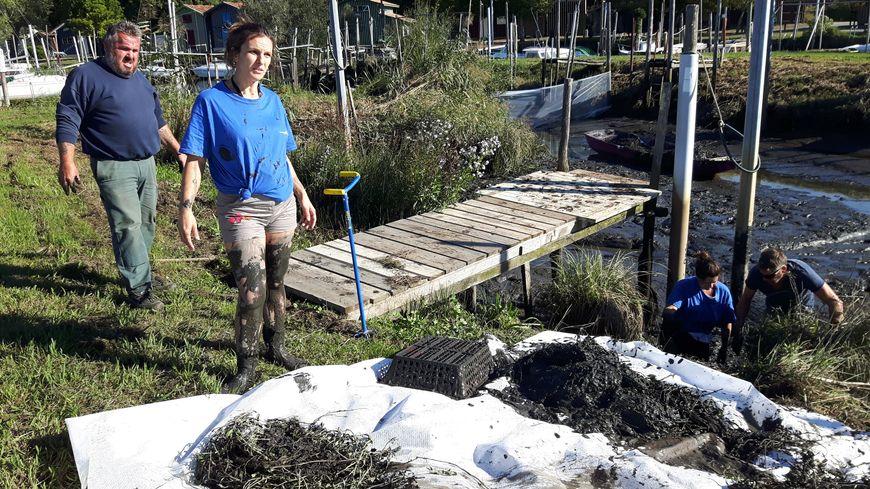 Arrachage de plants de jussie dans le port de Biganos