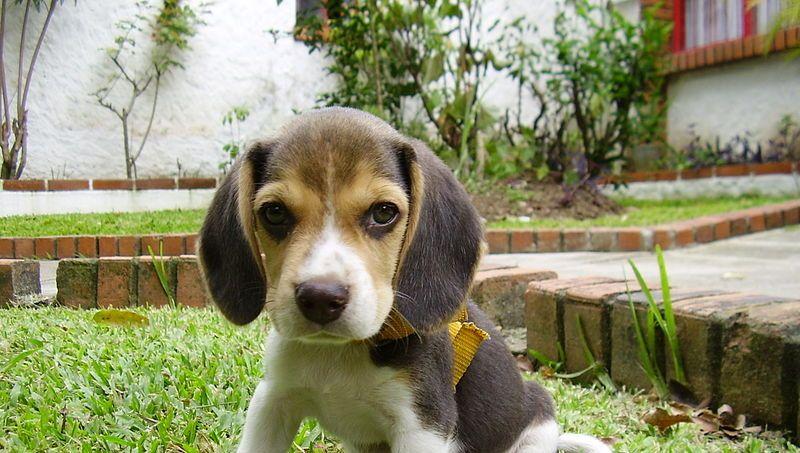 dressage chien haute savoie