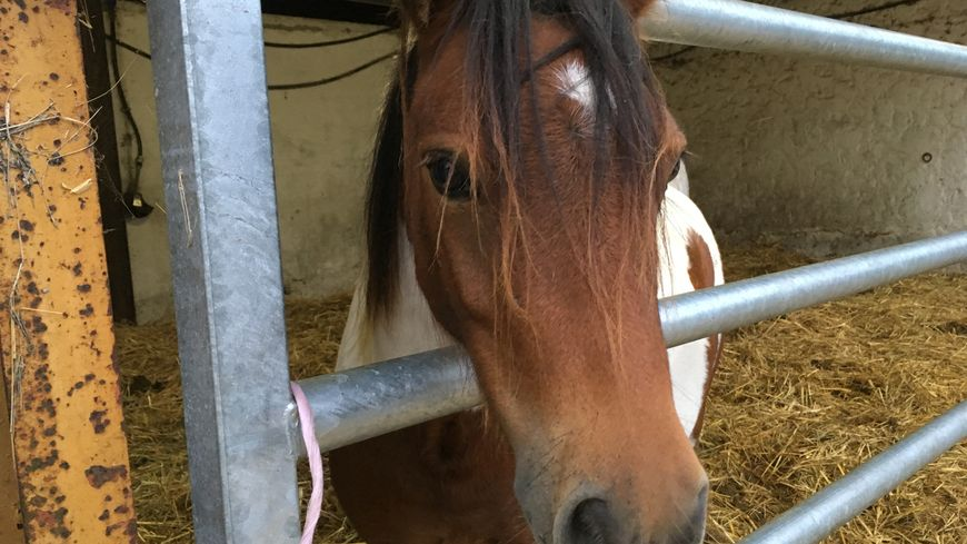 Diamond, poney de 5 ans