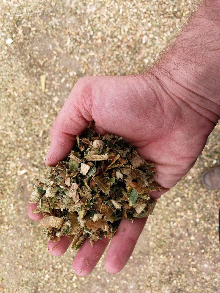 L'ensilage de Nicolas... Il s'agit de maïs sur pied passé à la broyeuse. Cette année il manque 80 tonnes de maïs du fait de la sécheresse.