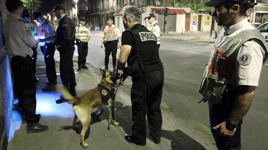 Plus de 1.200 chiens sont utilisés par les policiers et gendarmes en France pour diverses missions.