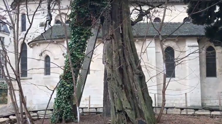 Les plus vieux arbres d'IDF