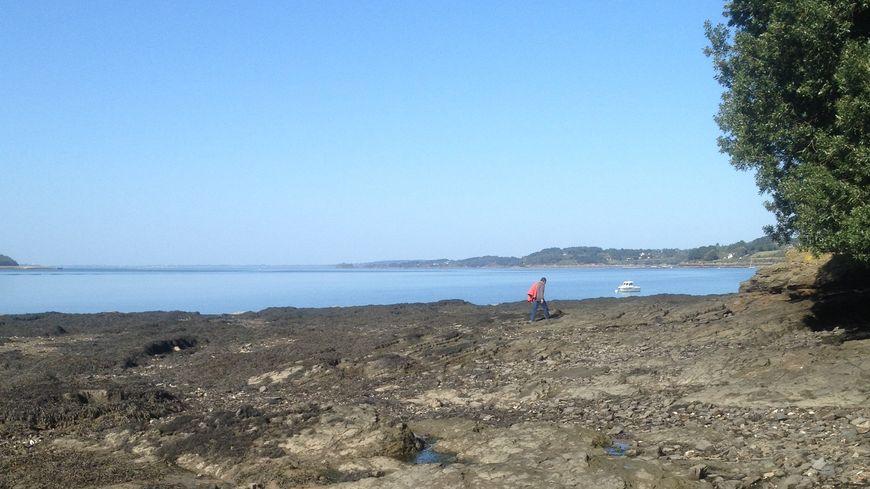 L'île de Tibidy est située à l'Hopital-Camfrout.