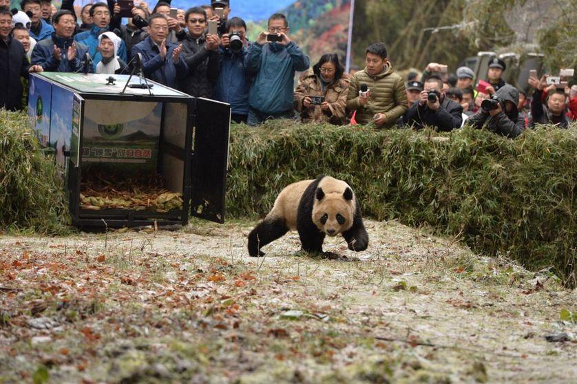 Faut-il renvoyer le monde animal à l'état sauvage ?