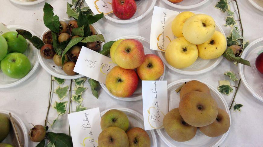 Des pommes de la Mayenne récoltées en 2018