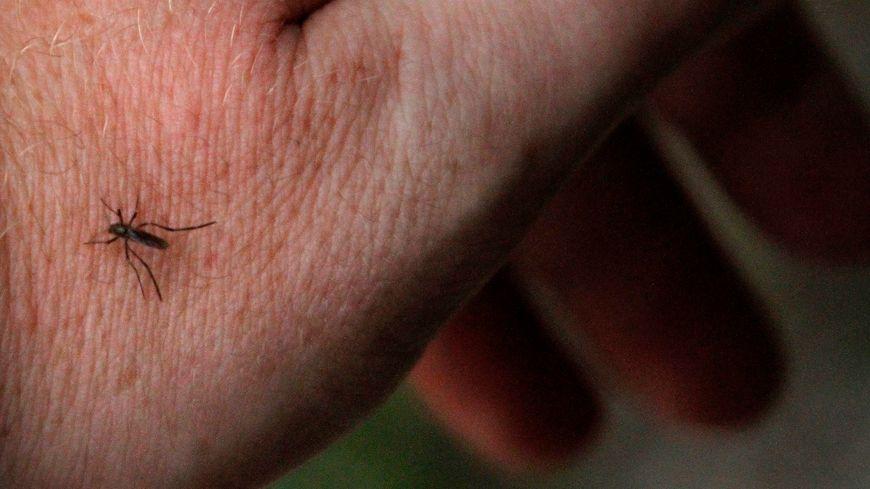 Le département de Loire-Atlantique est encore en vigilance orange sur le site internet vigilance-moustiques.com