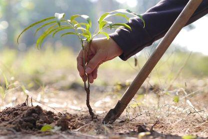 2 432 378 arbres replantés avec Reforest'Action