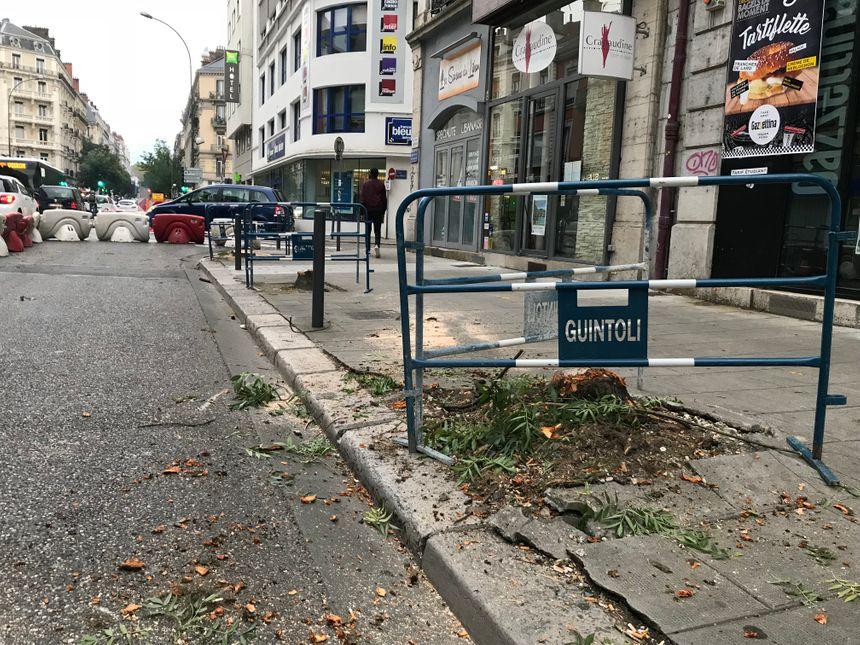 La métropole assure que d'autres arbres seront re-plantés, avenue Félix Viallet à Grenoble. - Radio France