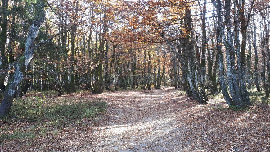 Près de 10 400 hectares de forêt du massif sont classés forêt de protection selon le décret paru ce lundi 29 otobre